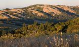 Grass & view twd Monte Bello_5642Cr2Ps`0607092011.jpg