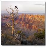 San Diego - Las Vegas - Grand Canyon, US (Apr 2006)