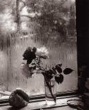 Last Roses, 1956