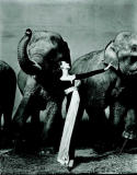Dovima with Elephants, Evening Dress by Dior, Cirque d'Hiver, Paris, France, 1955