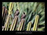 small_australian_birds