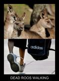 DEAD ROOS WALKING.JPG