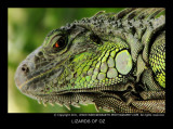 reptiles_and_lizards
