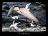 DOWN BY THE SEA.jpg