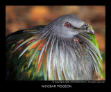 asian_birds