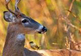 Deer & Passenger
