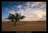 Wahiba Sands - Alone in the sands