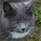 16/9 Very friendly cat