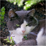 23/1 I want instant summer so I can snap catpics outdoors.