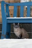 Heles neighbours cat.