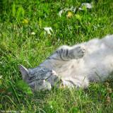 Sunbathing Grålle