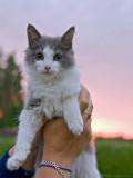 Sunset kitten, Bamse