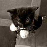 Pool kitten