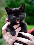 Puma, new tough kitten (female) in Gråska.