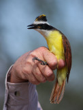 Dobie Ranch Bird Banding