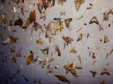 Jimmy Jackson moths of Ecuador