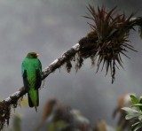 IMG_9254  crested quetzal.jpg