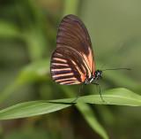 Ecuador Butterflies