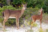 Bambi and Mom