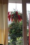 Hoa Ðà Lạt