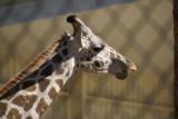 The Naples Zoo