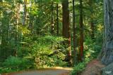 Jedediah Smith  Redwoods State Park