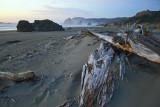 Pistol River Beach Driftwood
