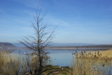 Lac de Morat