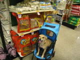 Aunty couldn't resist stuffing me in this pet carriage... weird!