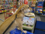 At the check-out stand, I met up with Bo, Commander in Leash, again...