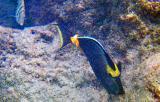 Haunama Bay Fish