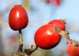 Frutos do Outono // Autumn Fruits