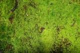 Musgo // Moss