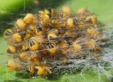 Macro - Spiders
