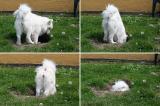 A Dogs Den