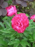 Flowers in Central Park.jpg