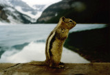 No, I wont pose for you again,  got any nuts?.jpg