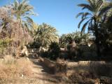 65 Farafra gardens.JPG