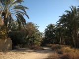 66 Farafra gardens.JPG