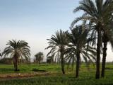 90 Dakhleh oasis.JPG