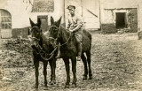 Soldier and Mules