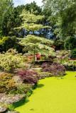 img_6981.jpg The Japanese Garden - Samarès Manor, St Clements - © A Santillo 2016