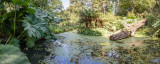 IMG_7202-Pano.jpg A prehistoric looking pond Abbotsbury Subtropical Gardens - © A Santillo 2016