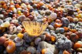 IMG_5906.jpg Shells on beach - Point Penmarc'h France - © A Santillo 2014