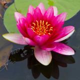 Flora - Hinton Ampner NT - Hampshire