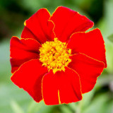 IMG_4868.jpg Unknown Flower - Nymans NT, Handcross - © A Santillo 2013