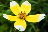 IMG_6732-Edit.jpg Unknown flower, Ventnor Bortanical Gardens - St Lawrence Ventnor - © A Santillo 2015