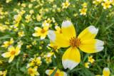 IMG_6739-Edit.jpg Unknown flower, Ventnor Bortanical Gardens - St Lawrence Ventnor - © A Santillo 2015
