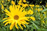 IMG_6741-Edit.jpg Unknown flower, Ventnor Bortanical Gardens - St Lawrence Ventnor - © A Santillo 2015