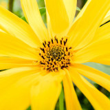 IMG_6745-Edit.jpg Unknown flower, Ventnor Bortanical Gardens - St Lawrence Ventnor - © A Santillo 2015